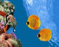 Коралловый риф Картина 40х50