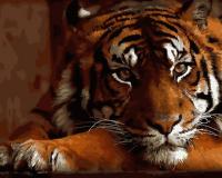 Красавец тигр GX 27291 Картина 40х50