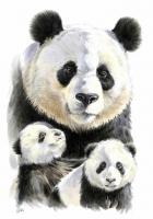 Семейство пандочек Картина 40х50